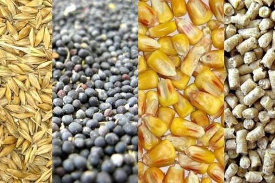 Füttermittel & Zusatzprodukte