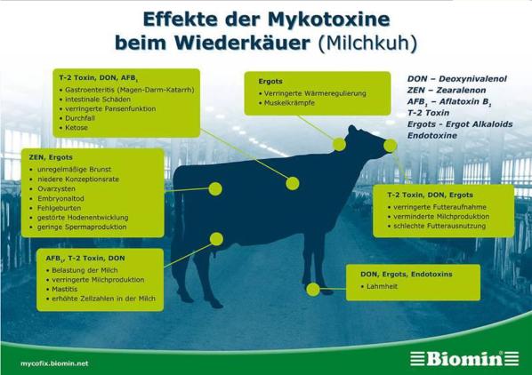 Effekte der Mykotoxine beim Wiederkäuer (Milchkuh)