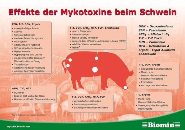 Effekte der Mykotoxine beim Schwein